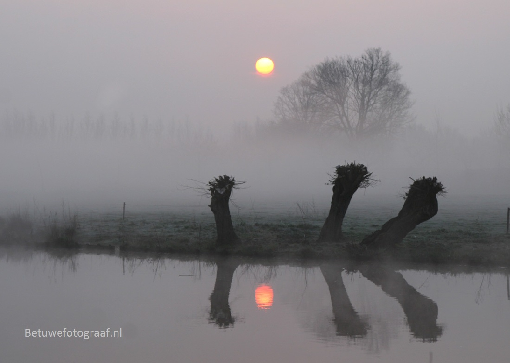 Give me a Title..................? by Betuwefotograaf