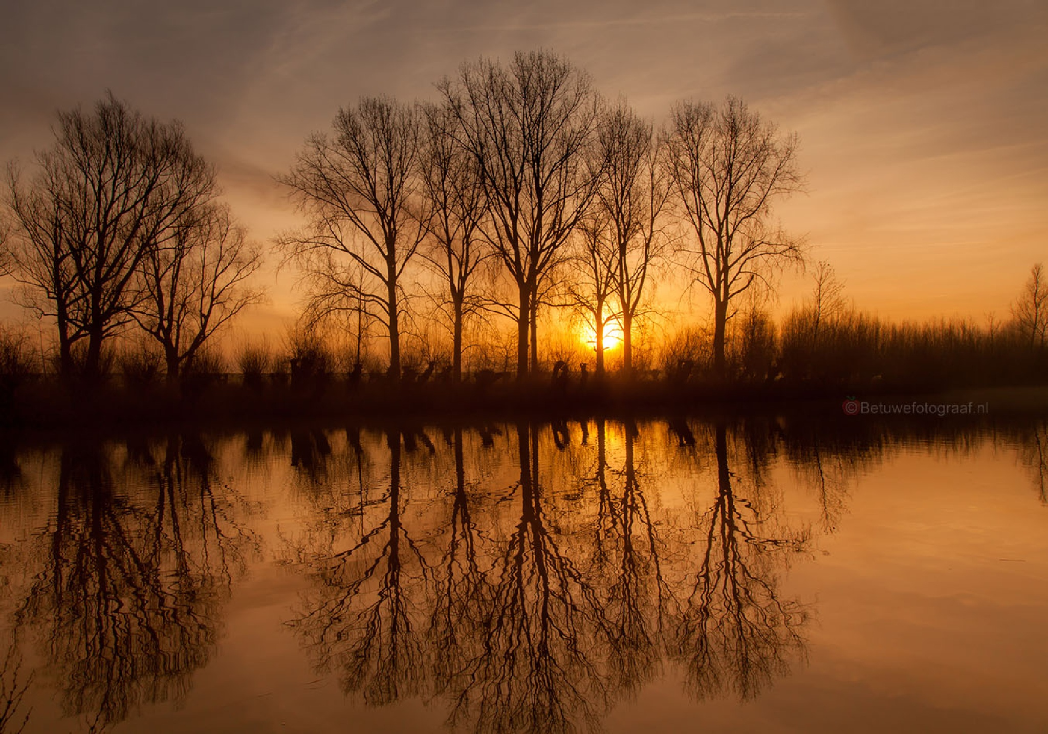 Reflections of the Trees......... by Betuwefotograaf