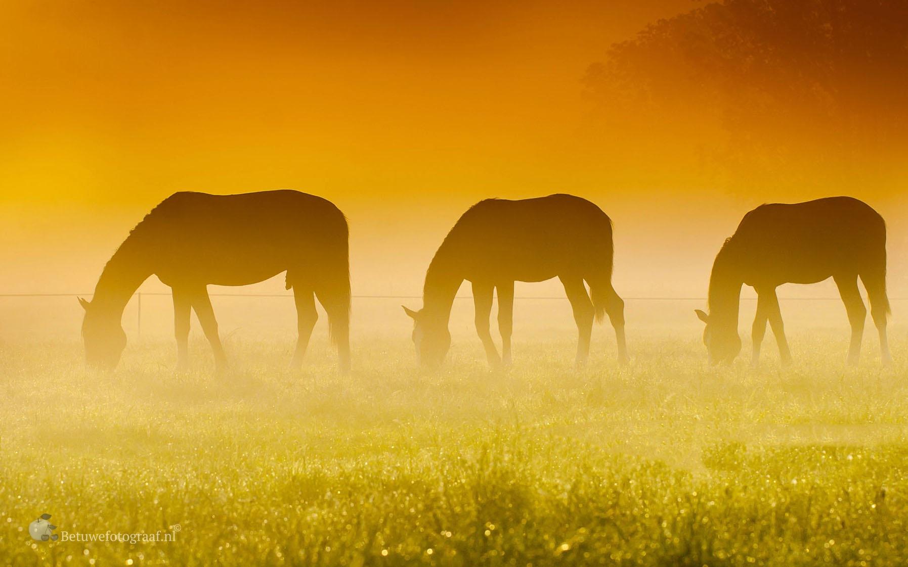 Three of a Kind by Betuwefotograaf