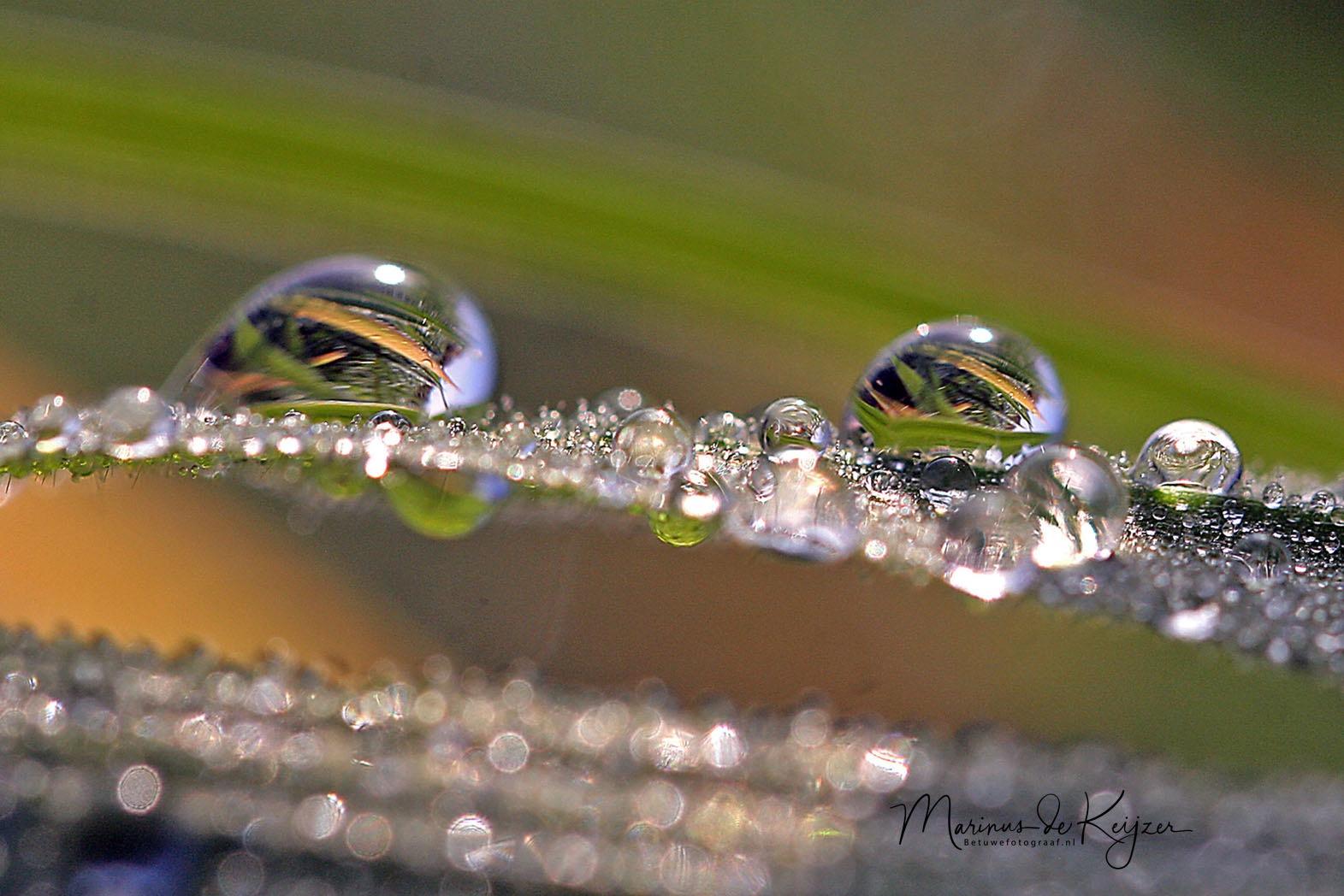 Pearls of Nature by Betuwefotograaf