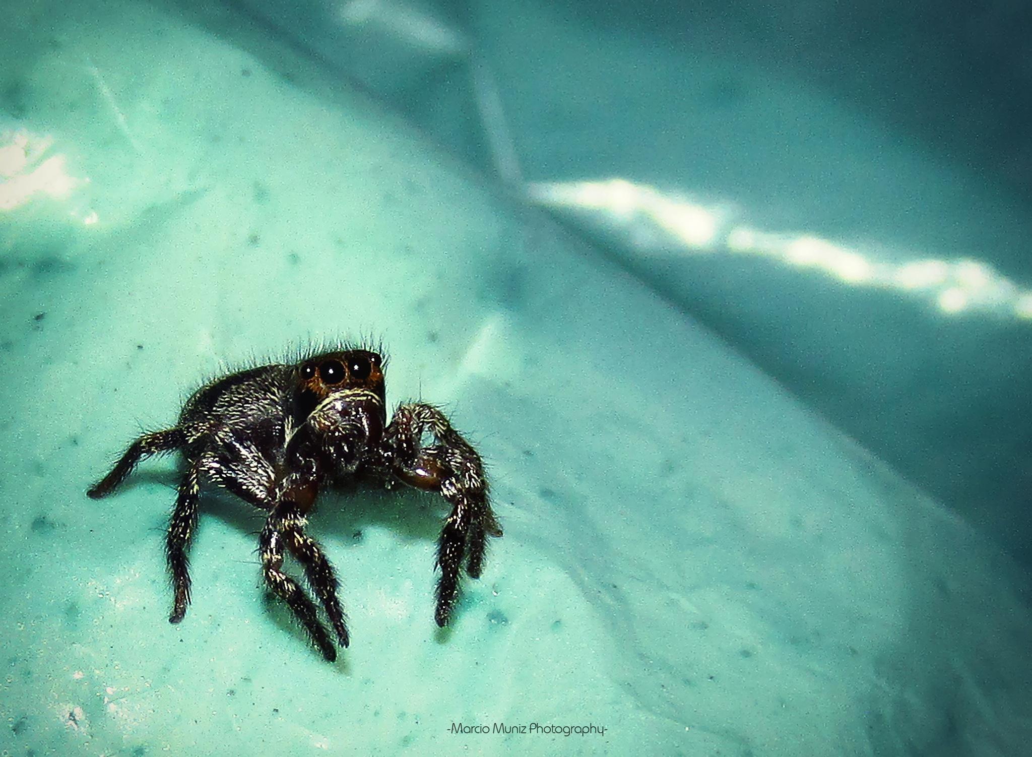 Spider by Marcio Muniz