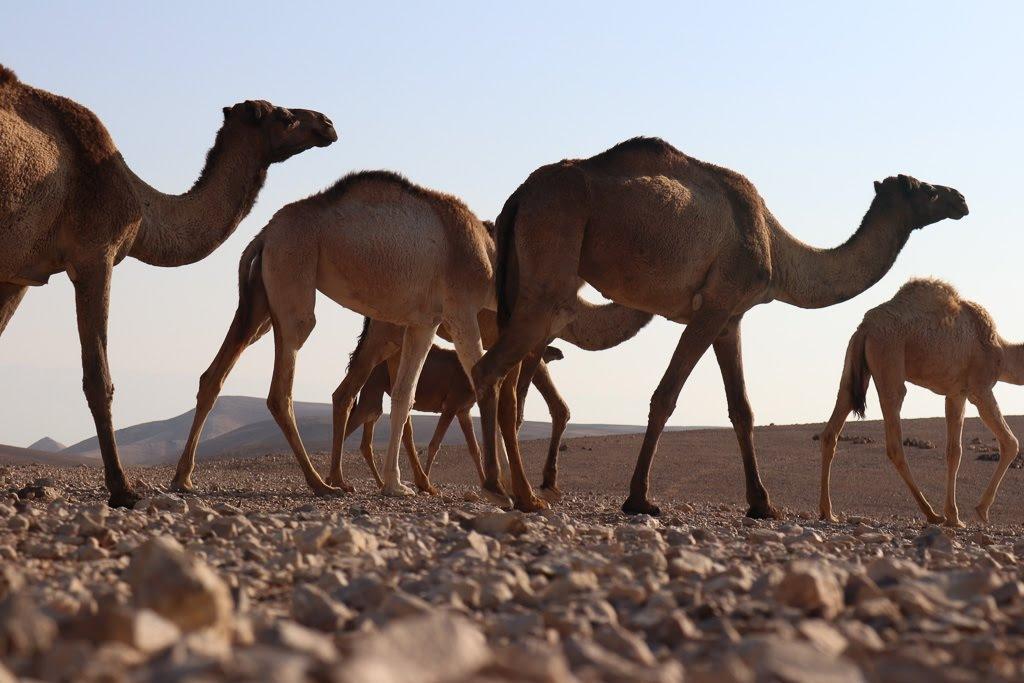 desert dwellers by Arava Ohayon