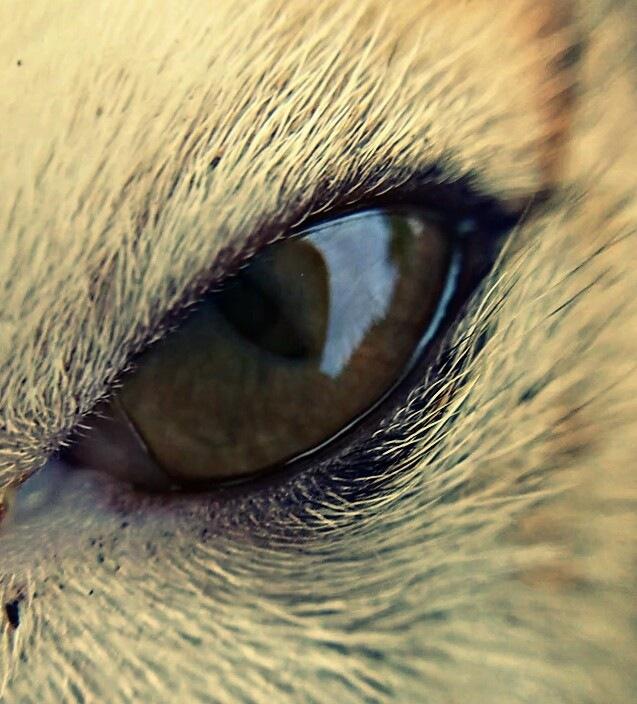 The Eye - Mobile Photography  by MONOJIT NANDI