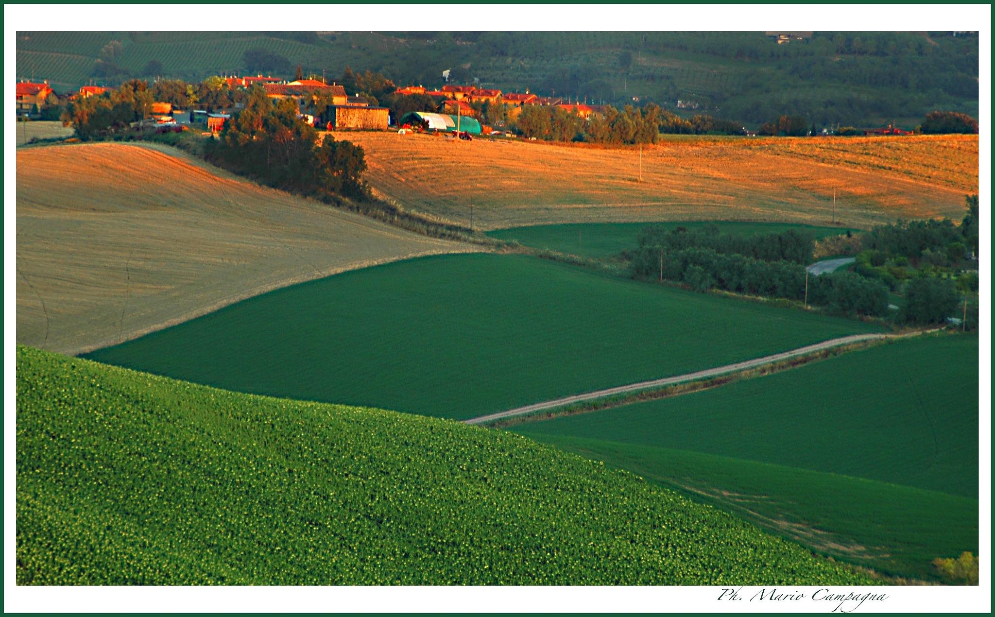 Campagna Marchigiana - Italy by mario campagna