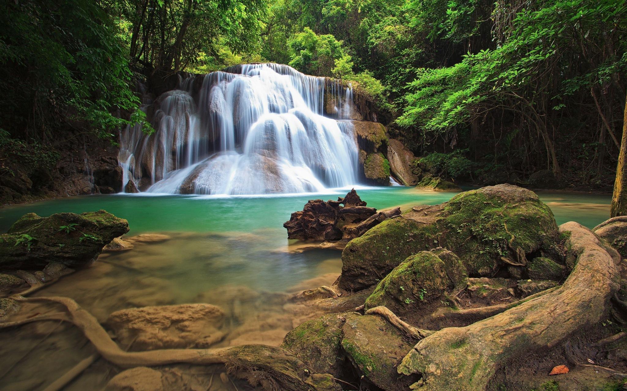 tropical forest  by gerardo