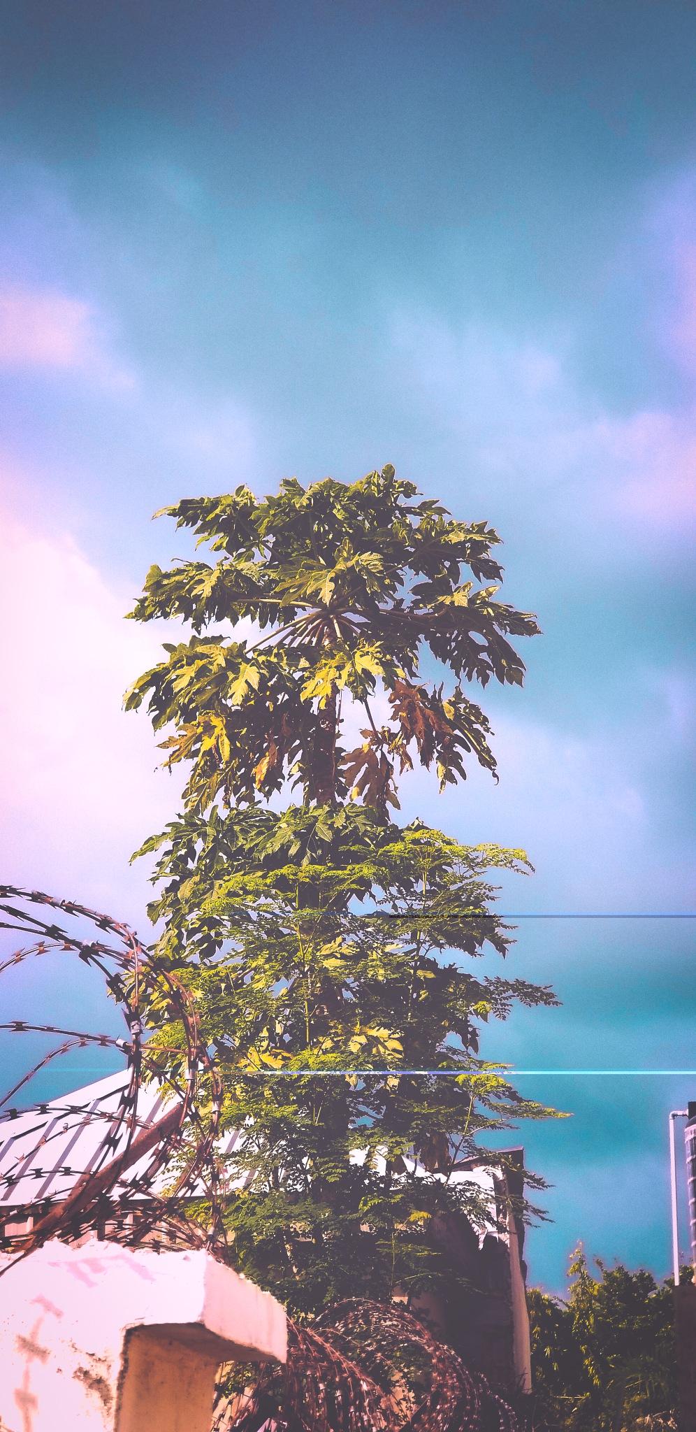 tree by jossybtk