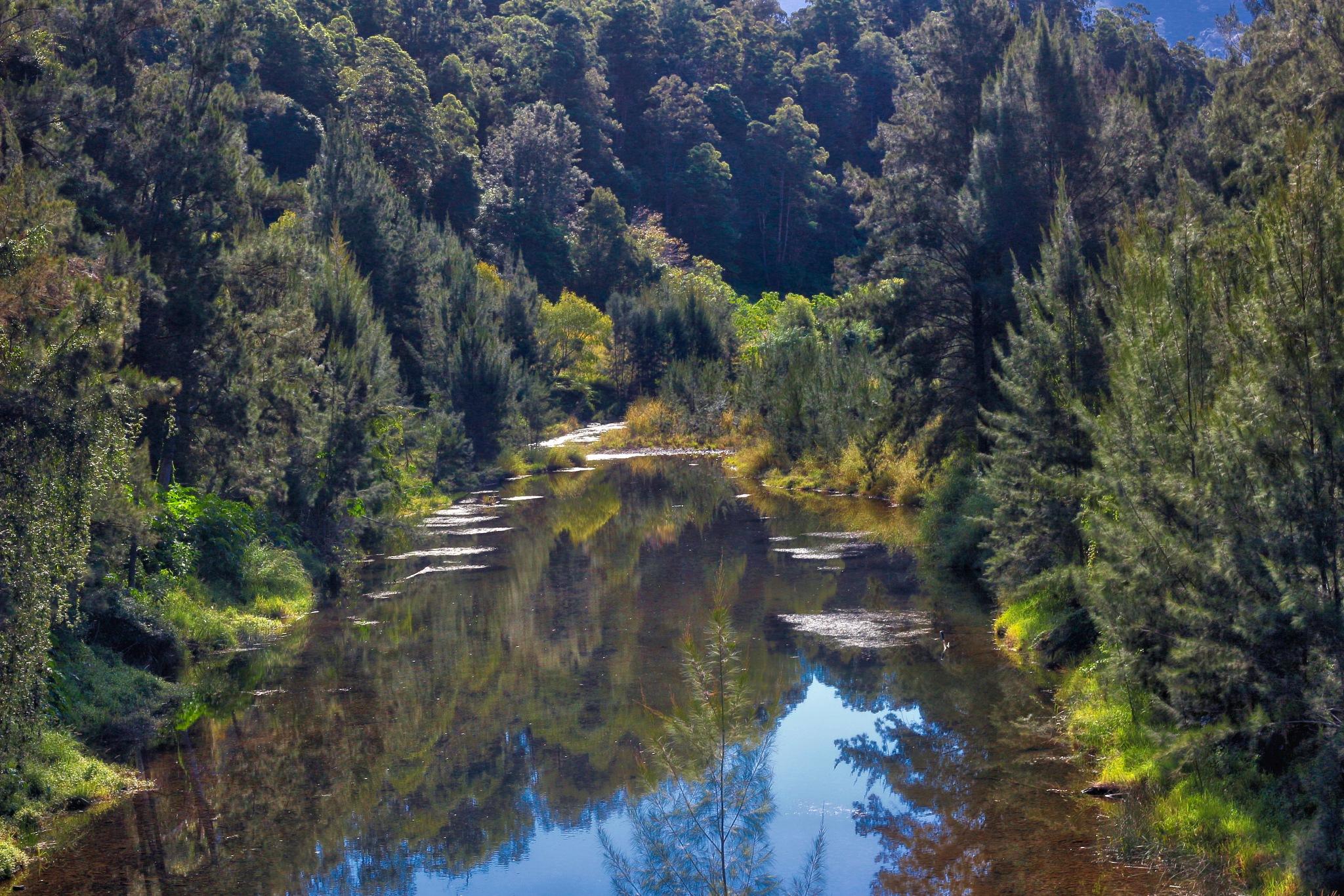 bellingen creek by Rachel Avery