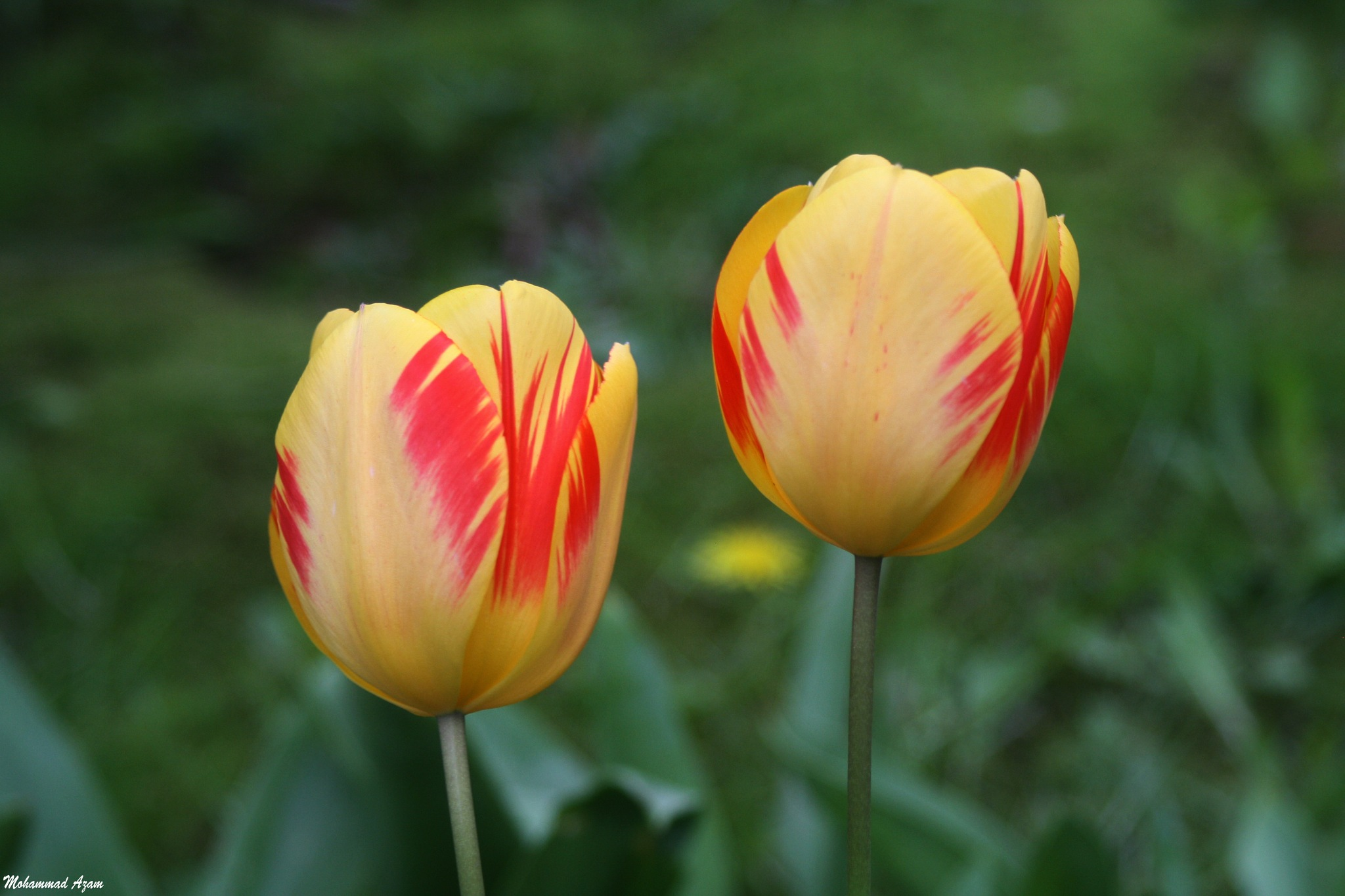 Flower  (22) by Mohammad Azam