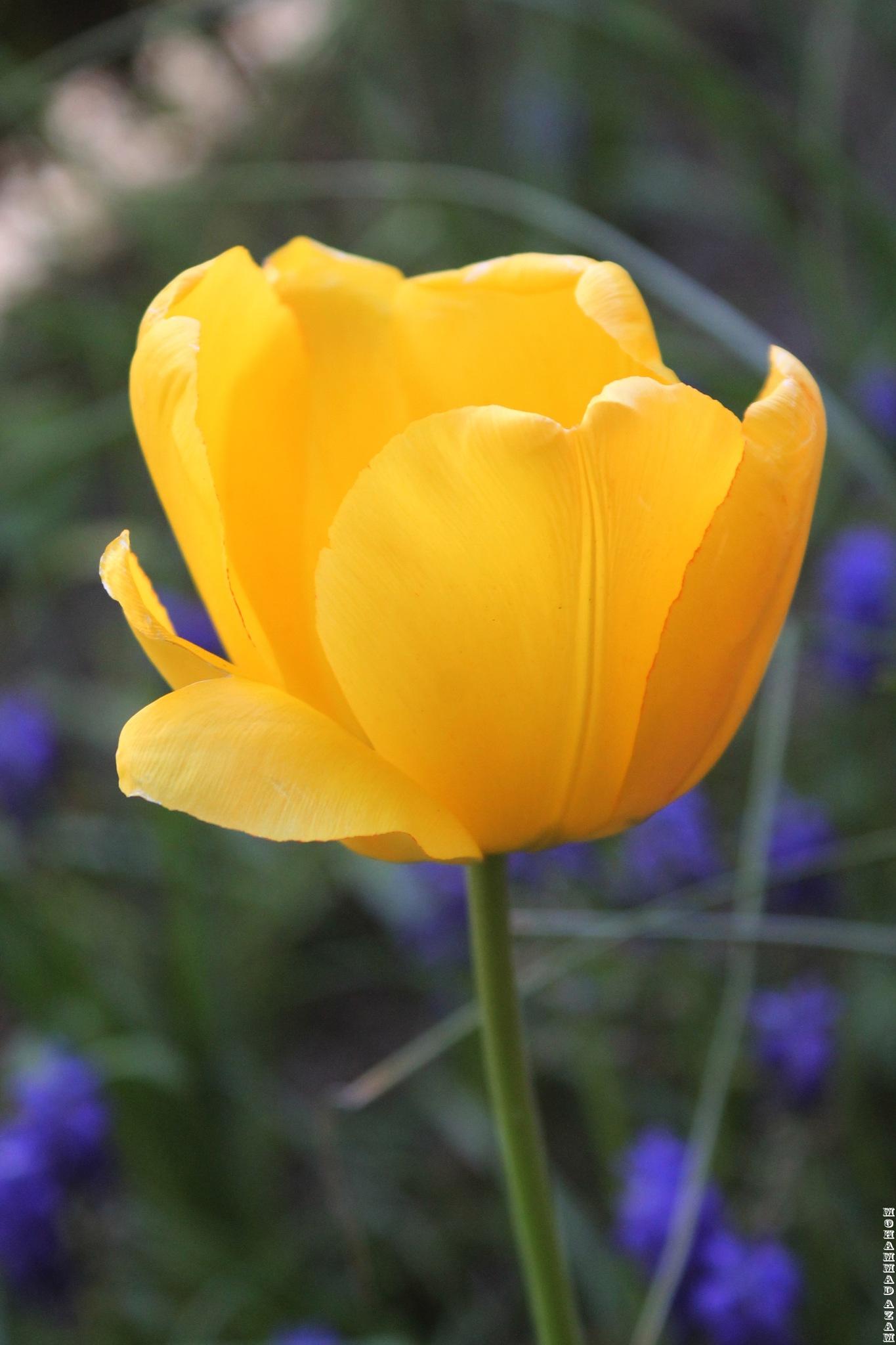 Flower 279 by Mohammad Azam