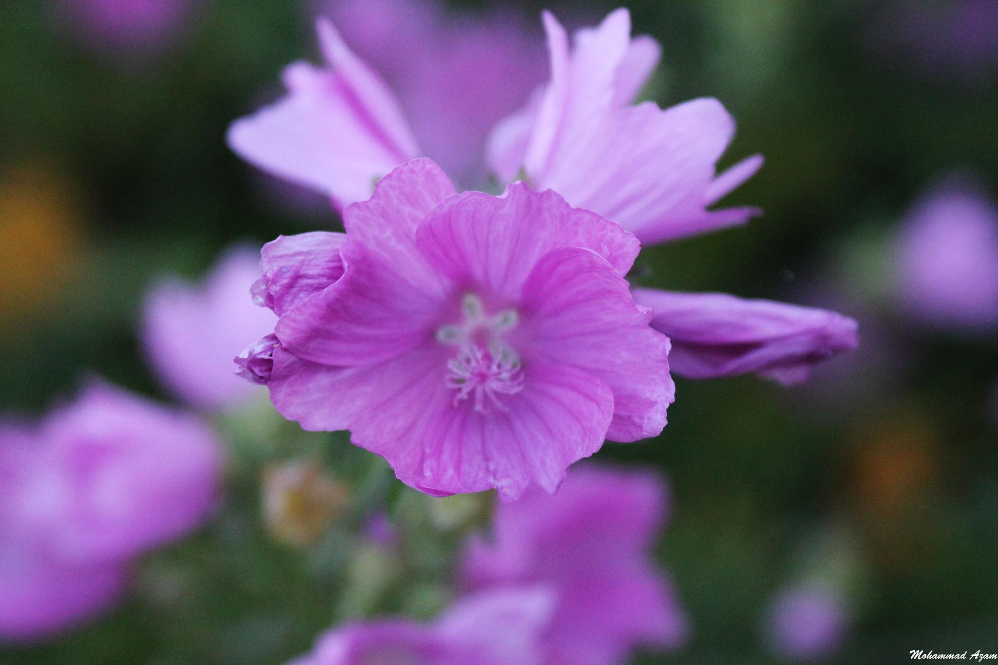 Flower 35 by Mohammad Azam