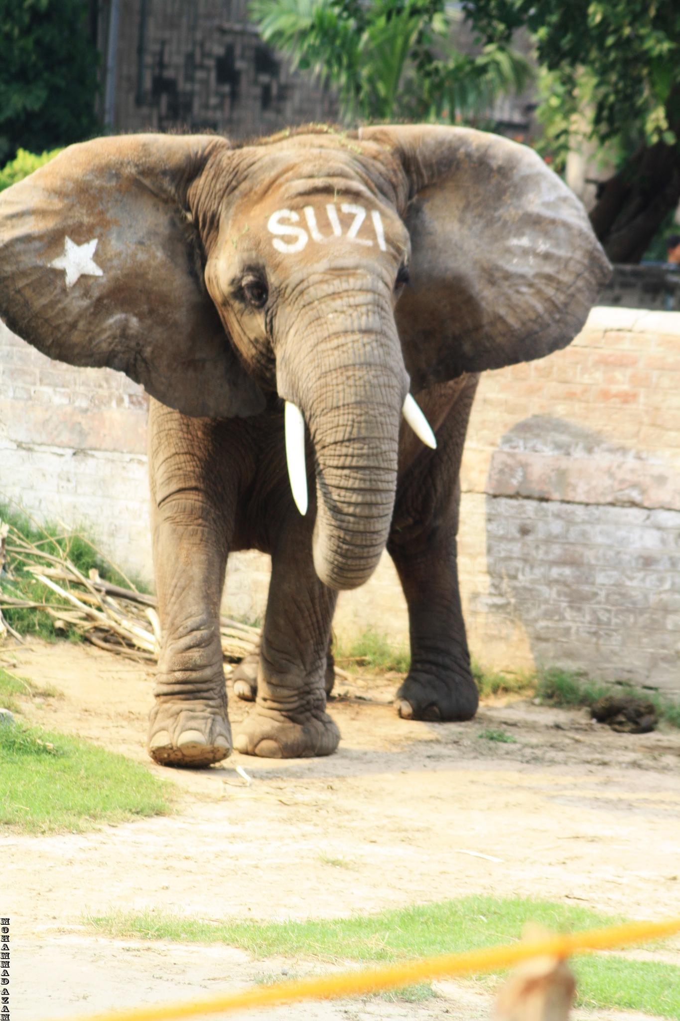 ELEPHANT 46 by Mohammad Azam