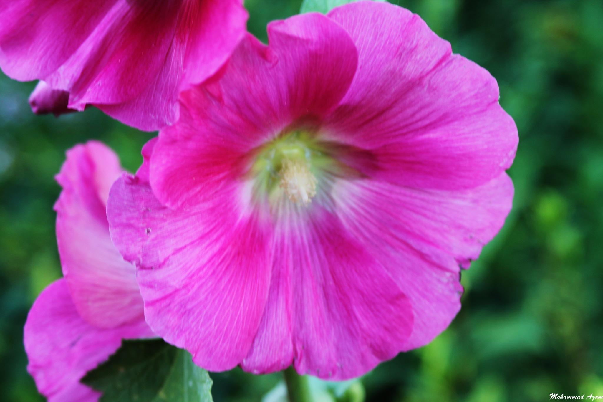 Flower 64 by Mohammad Azam