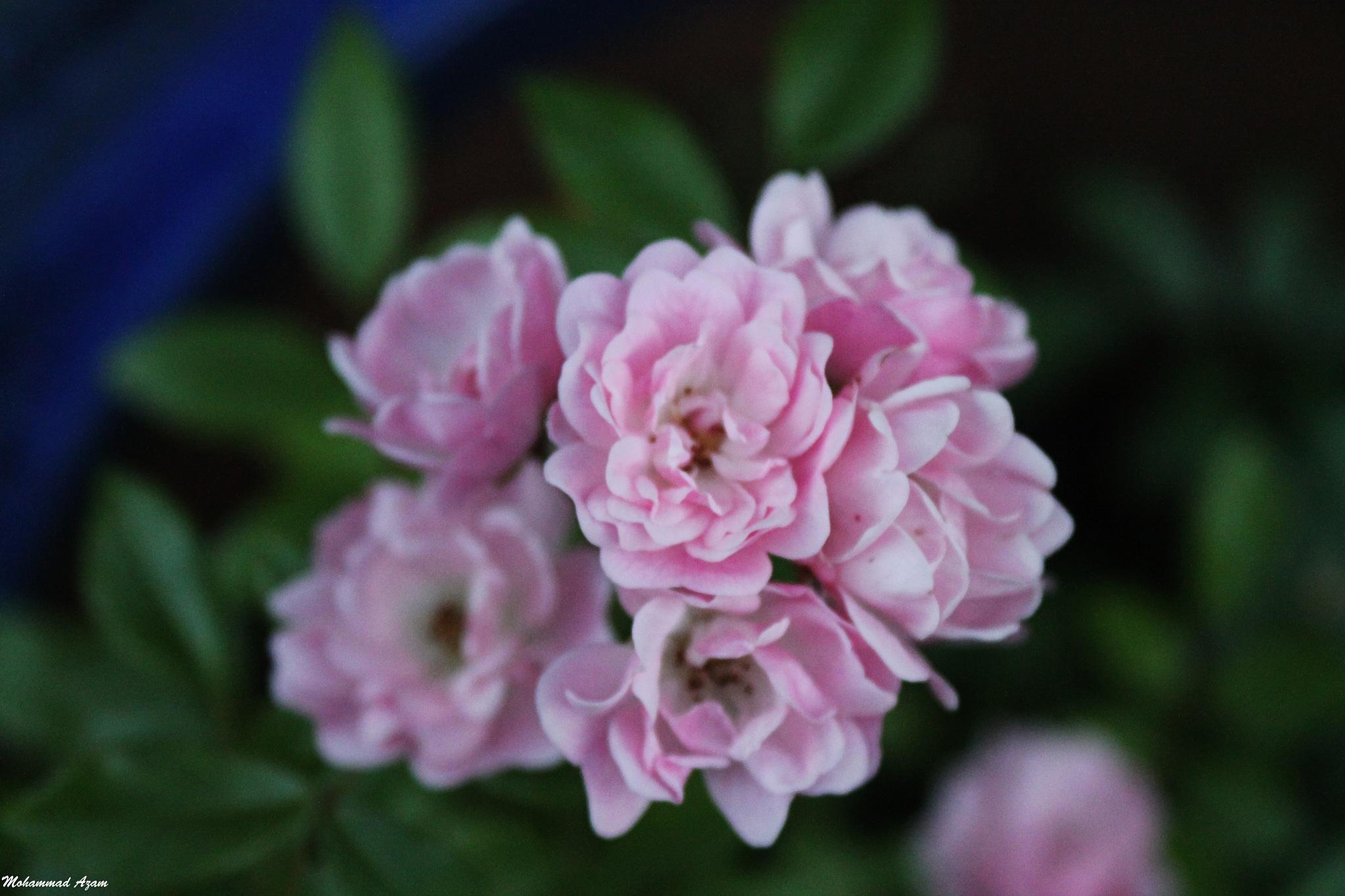Flower 122 by Mohammad Azam