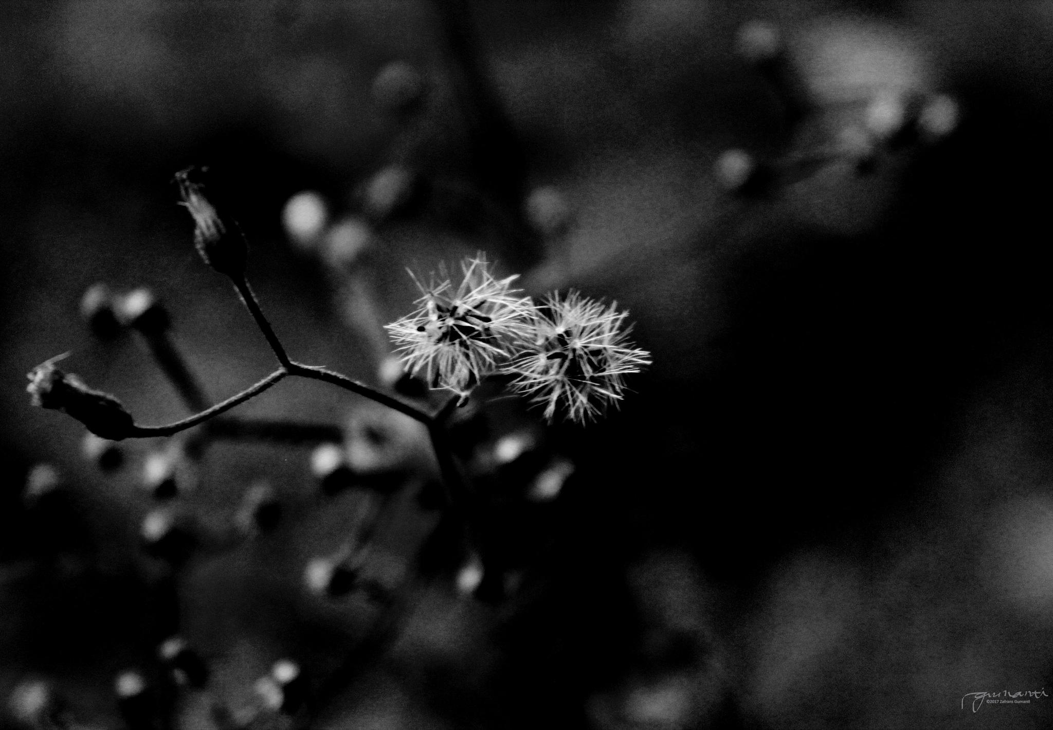 Closer by Zafrans Gumanti