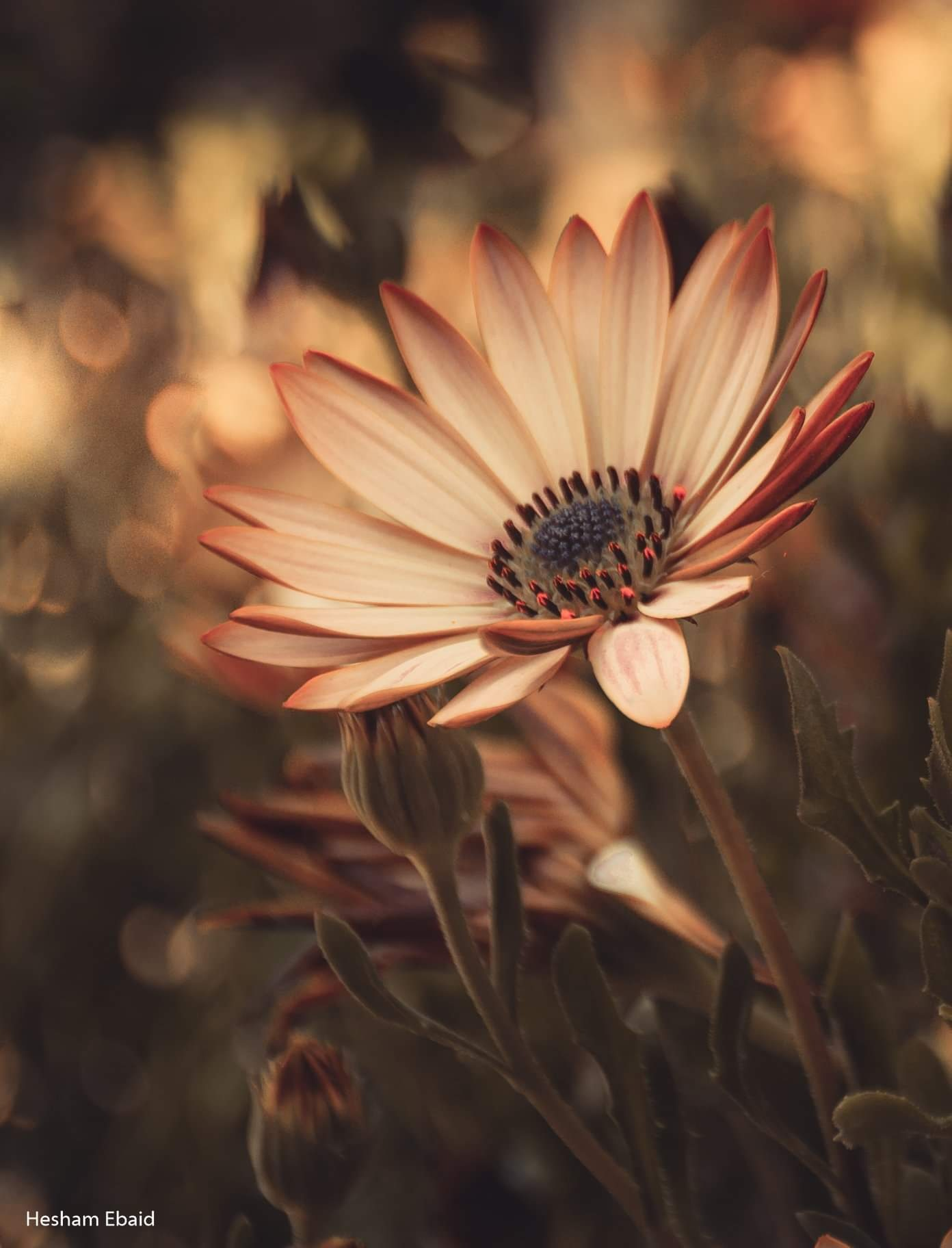 flower  by Hesham Ebaid