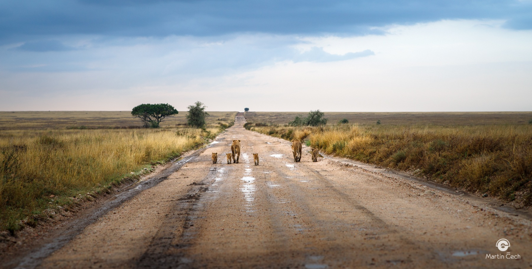 Mother liones in Serengeti by Martin Čech Photography