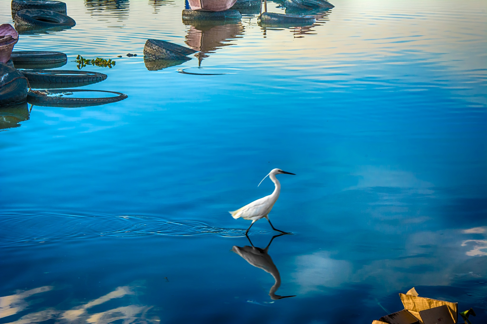 bird on water by Mohamed T-Derbala