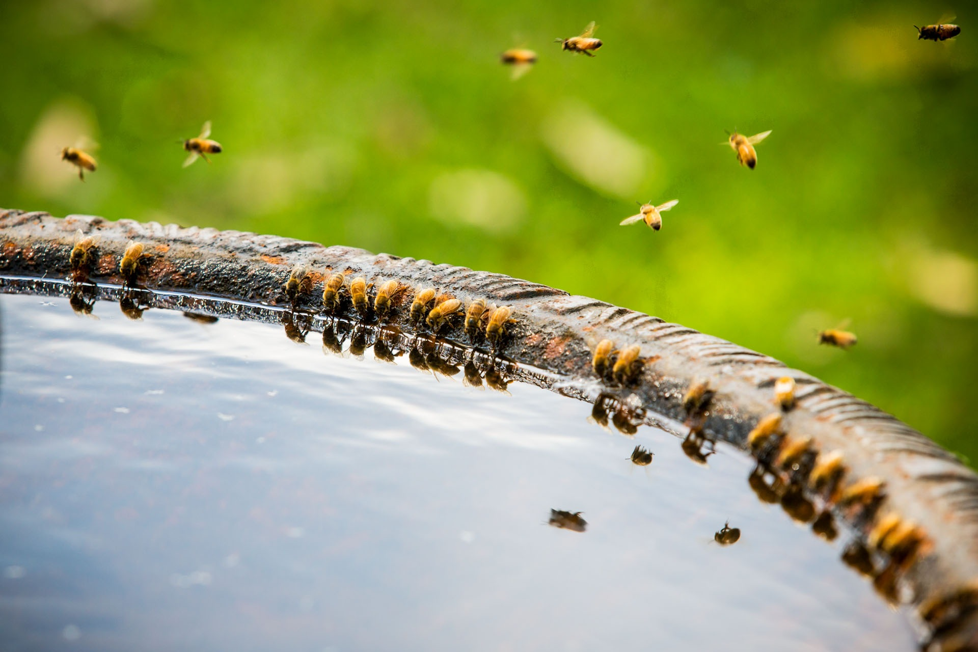 Bee Happy Hour! by Peter Karp Photography