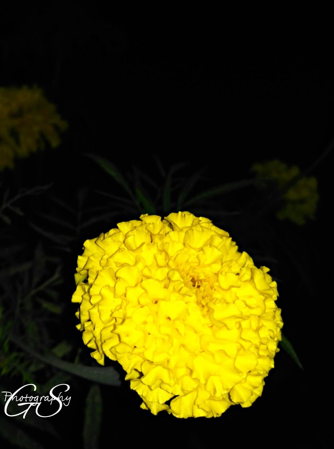 flowers  by Gursharndeep Singh