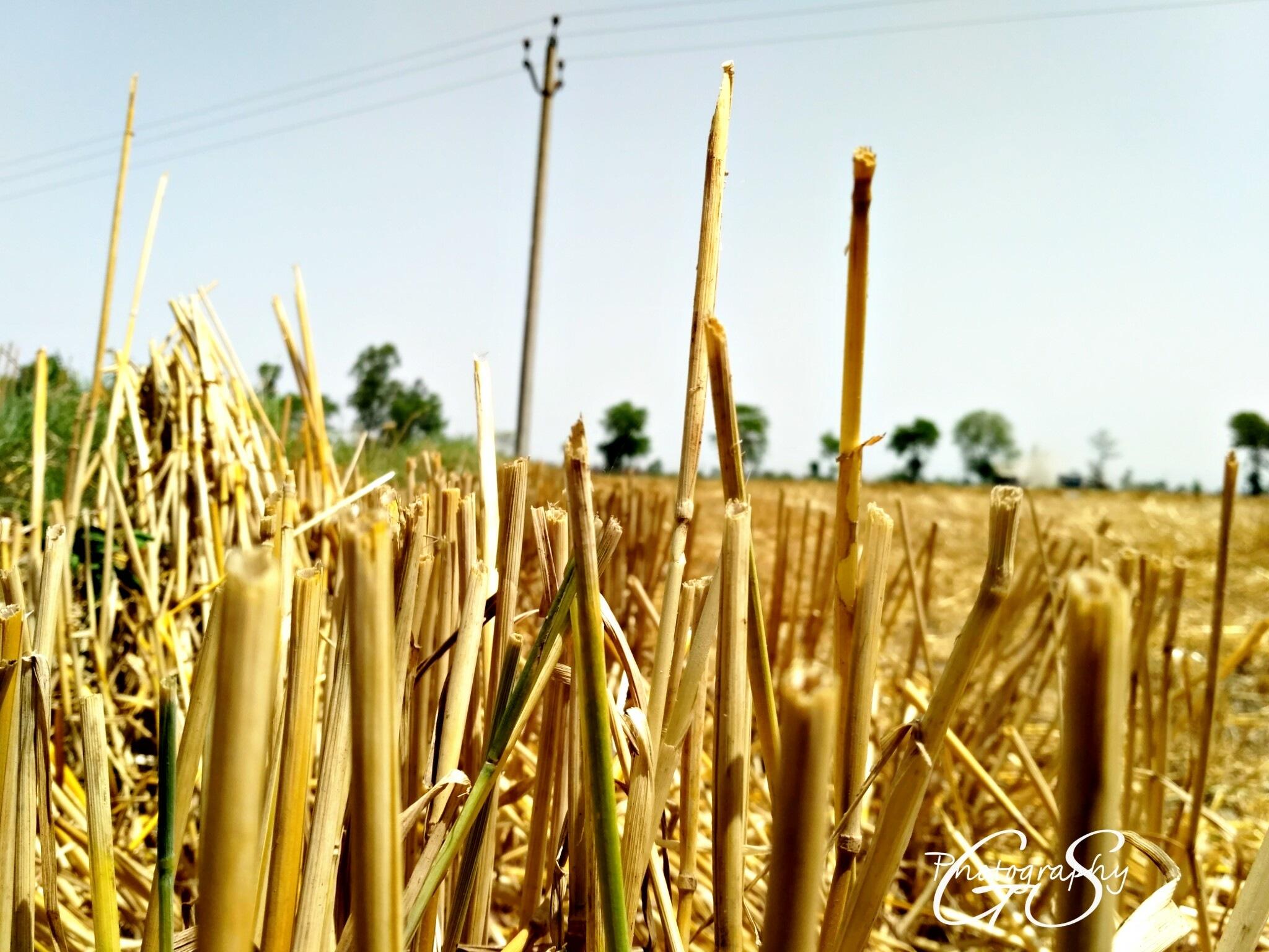 nature  by Gursharndeep Singh