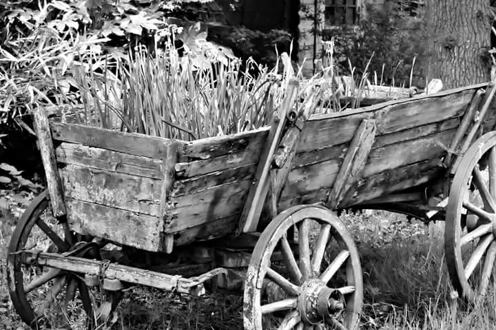 Abandoned cart by Ralph Harlow