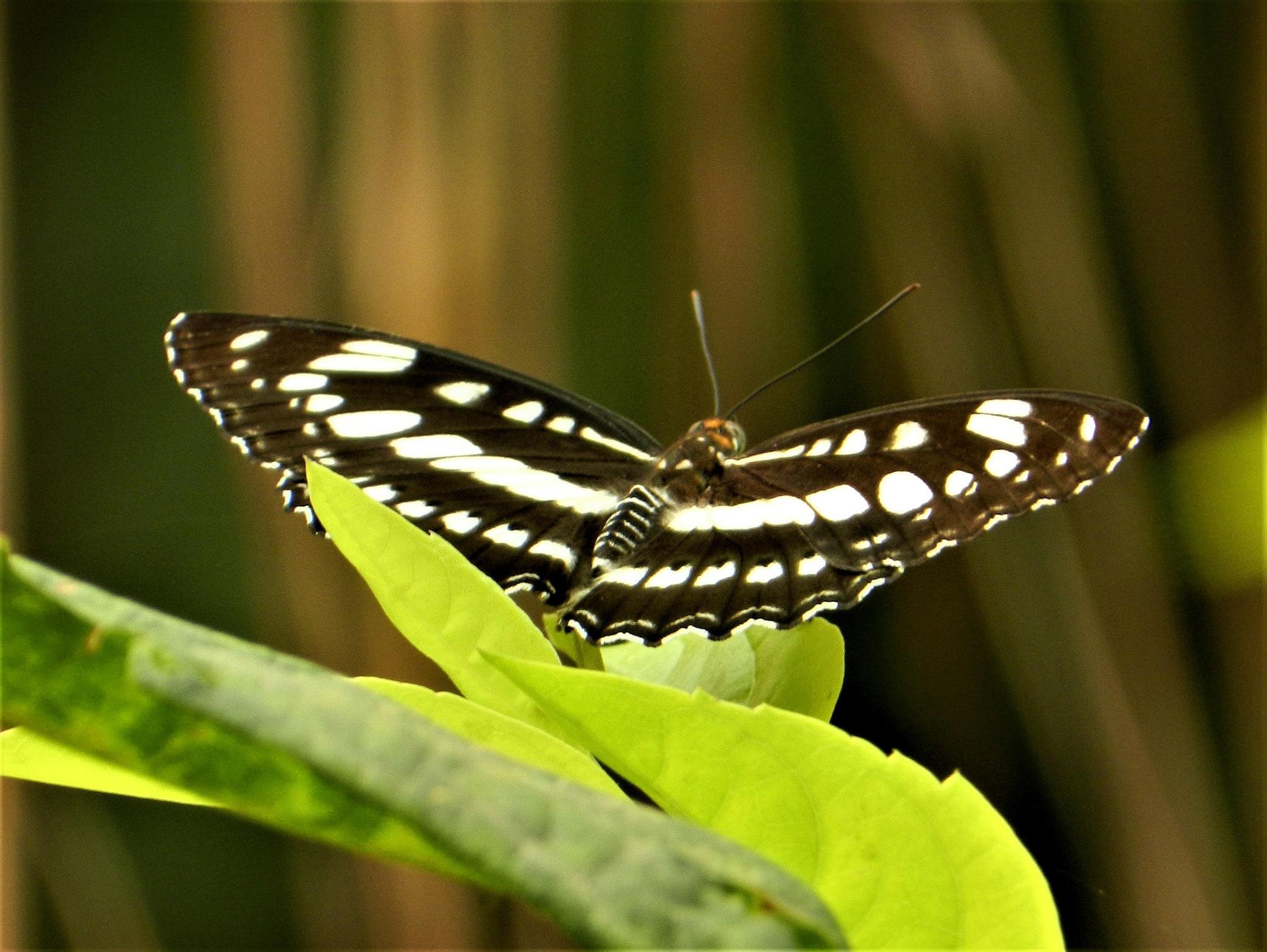 Moth by Srijini Pal