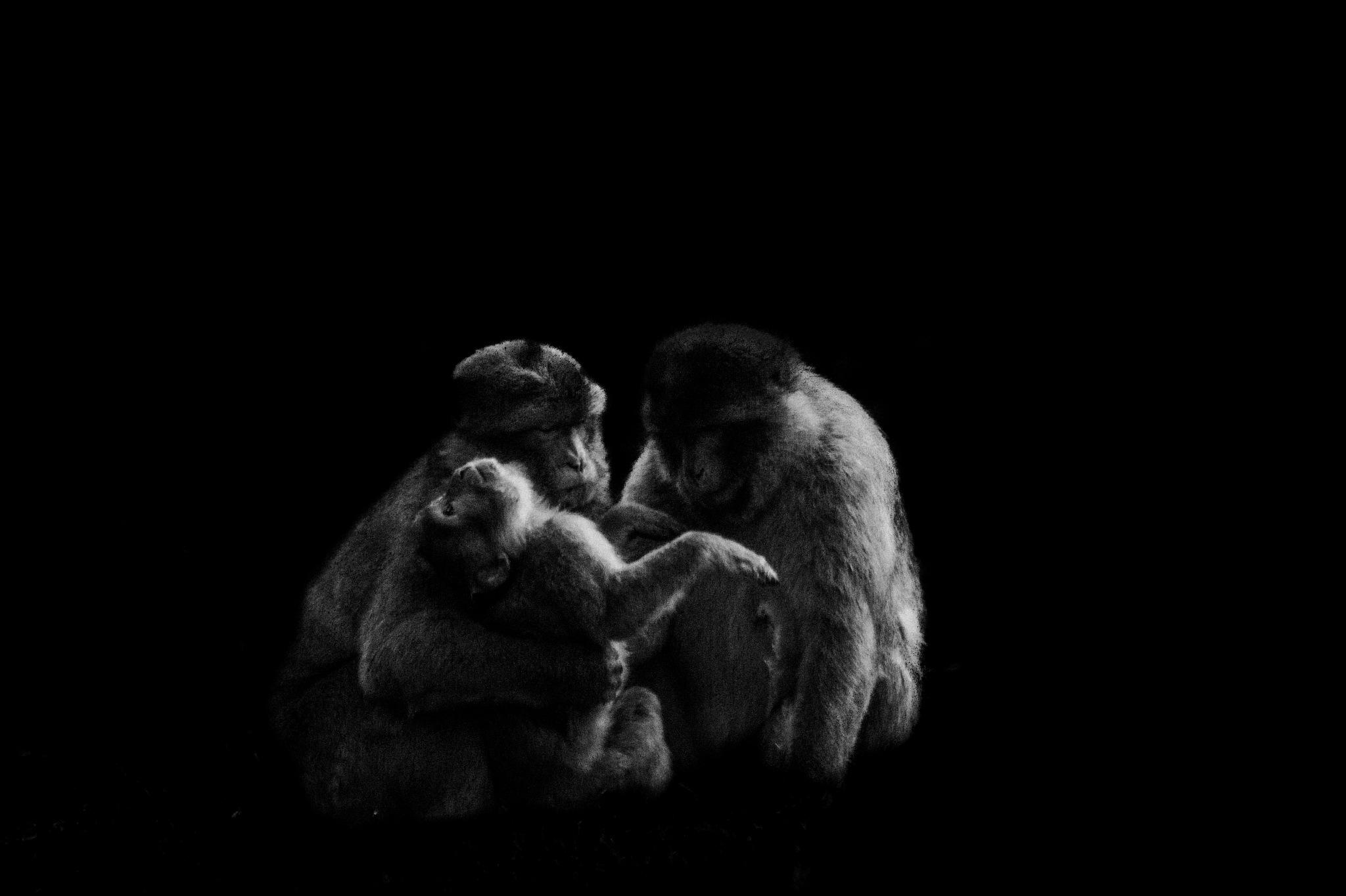 Family Meeting by Kort Bebbington