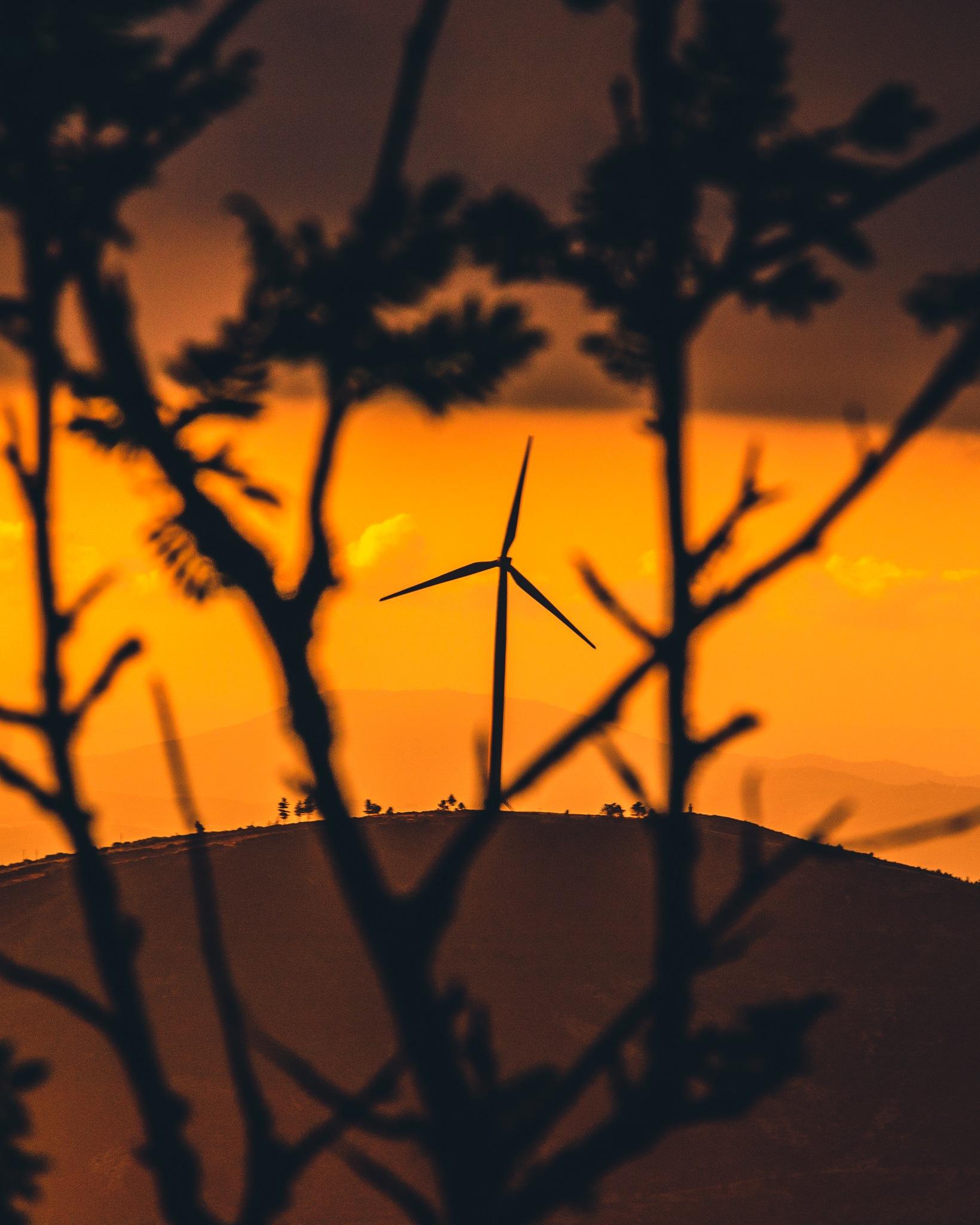 Green Energy @ Trevim by Tiago Santos
