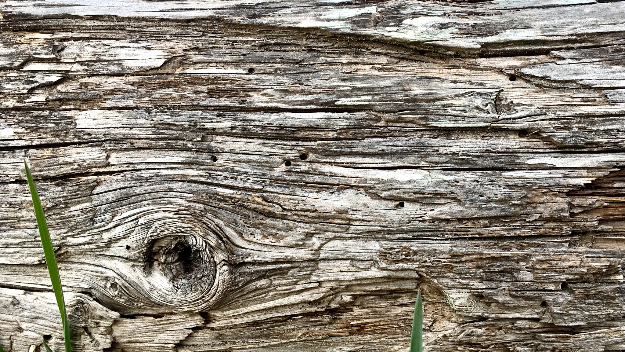Textures in Nature by  Charles J. Walbaum