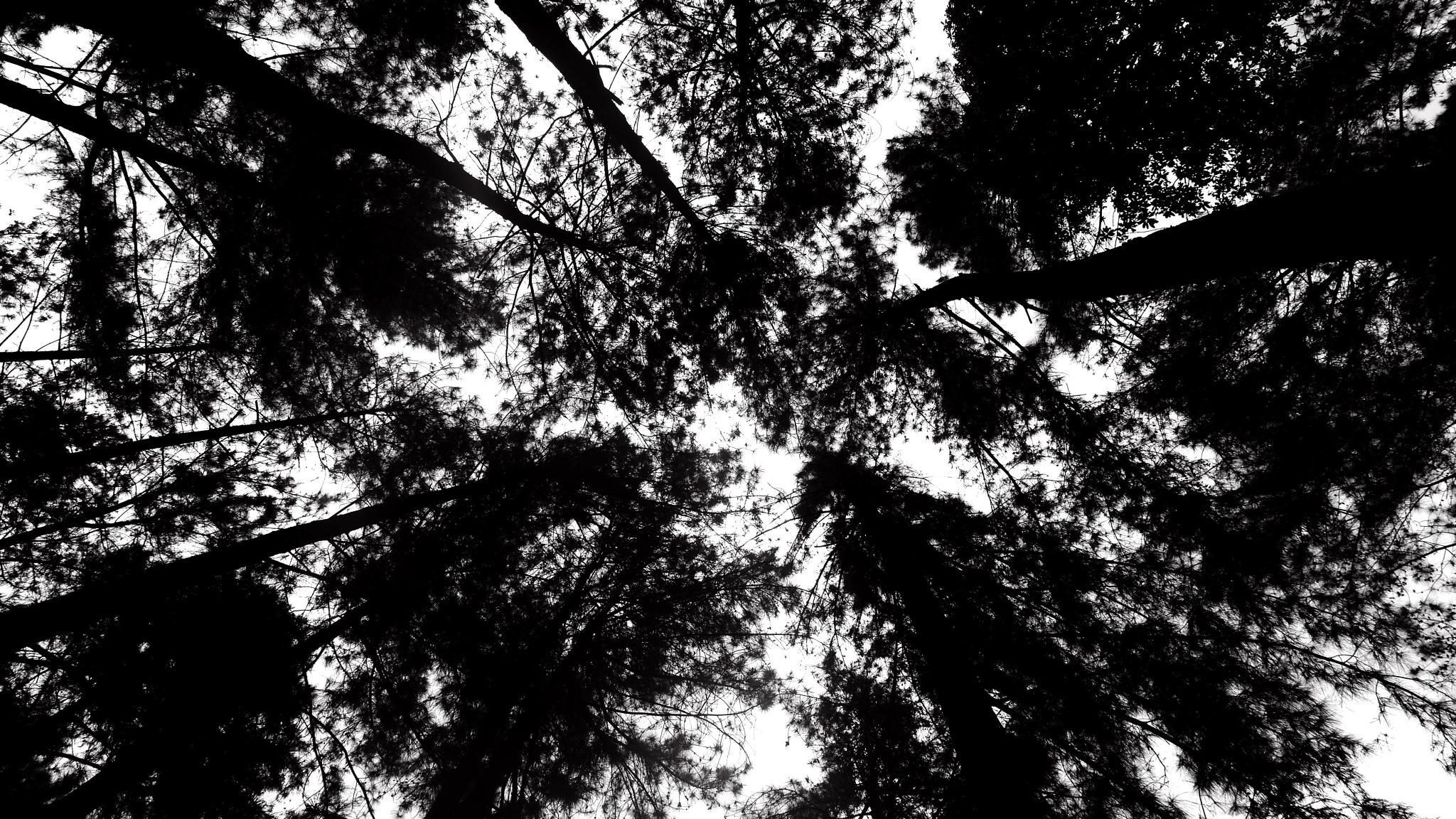 Dark Forest by Stevanus Setiawan Halim