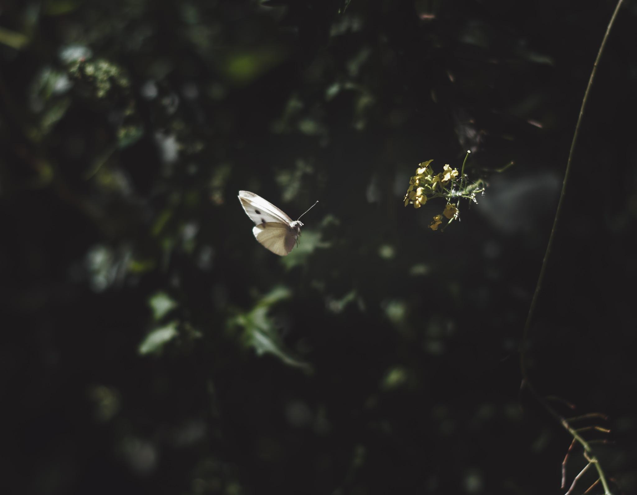 fly away by Jessica Holzmann