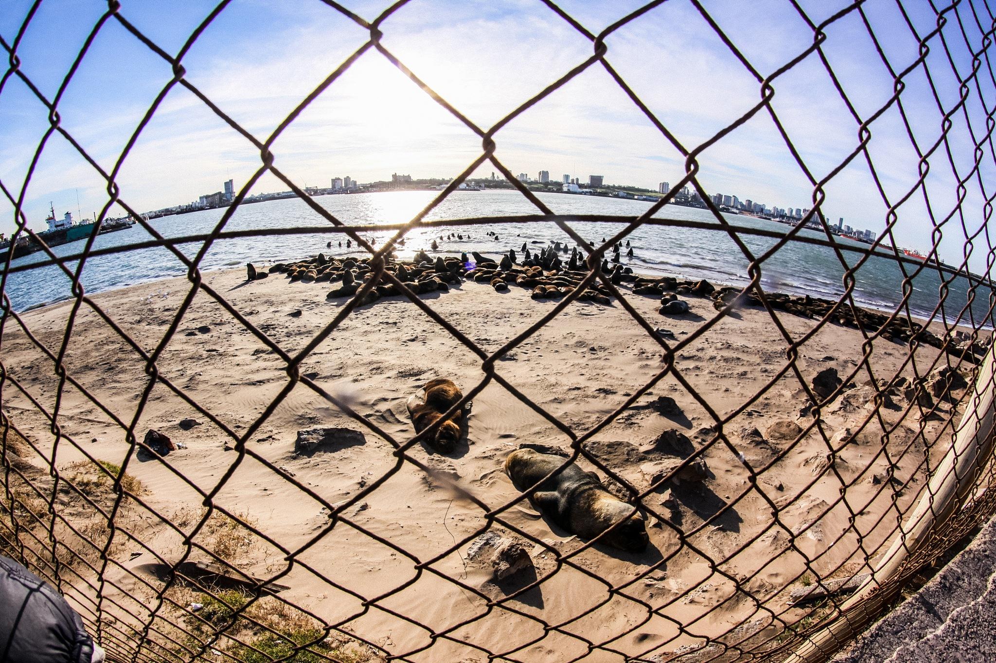 Puerto de Mar del Plata by Estefa Rabe