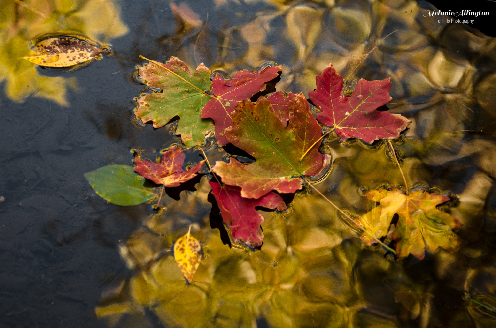 Floating Fall by Melanie Allington