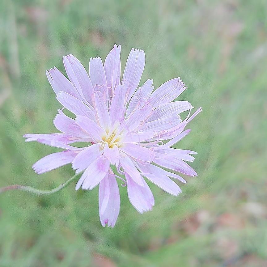 flor by Dita M GC