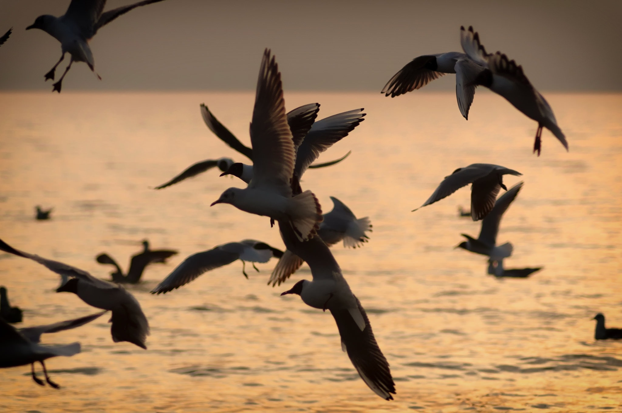 Evening Seagulls by just._.tea
