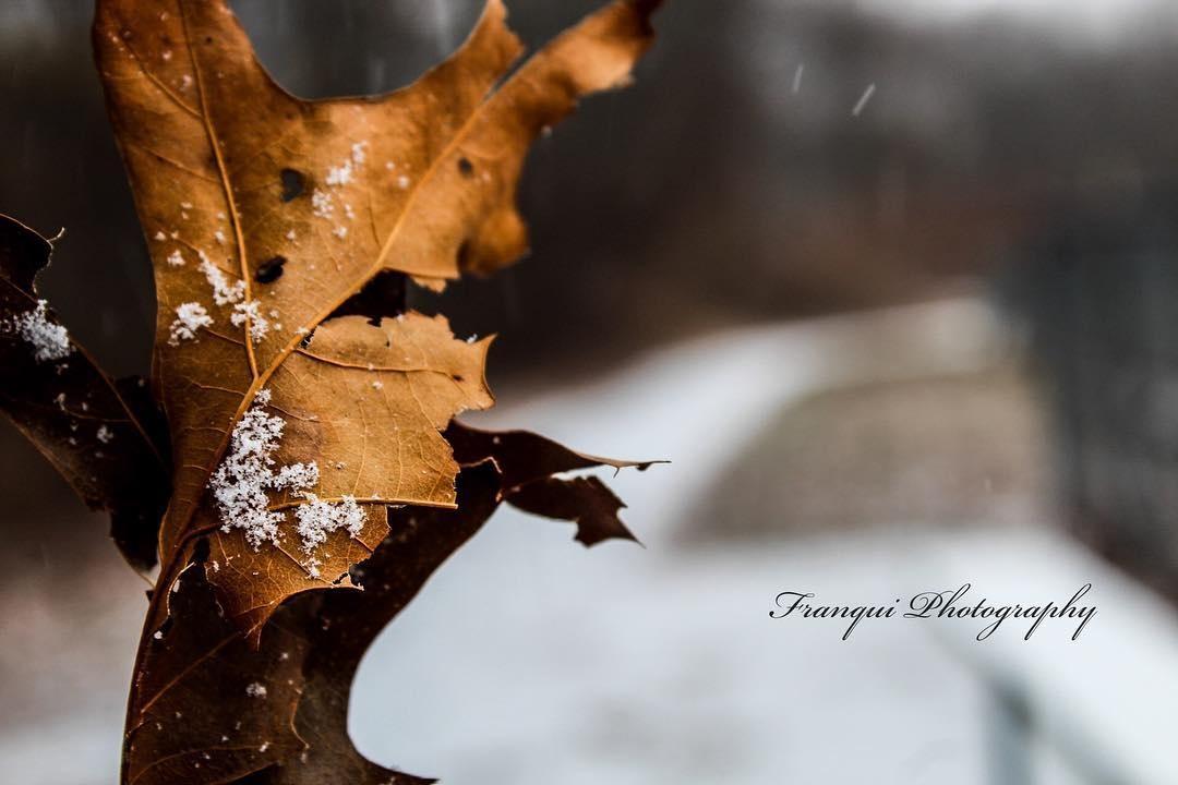 Winter in Rhode Island by Danielle Franqui