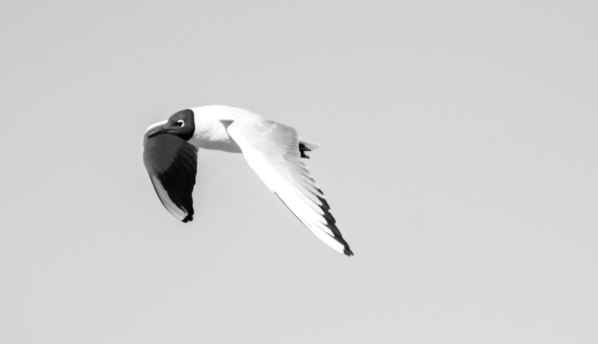 Flying Away by Essi Kultanen