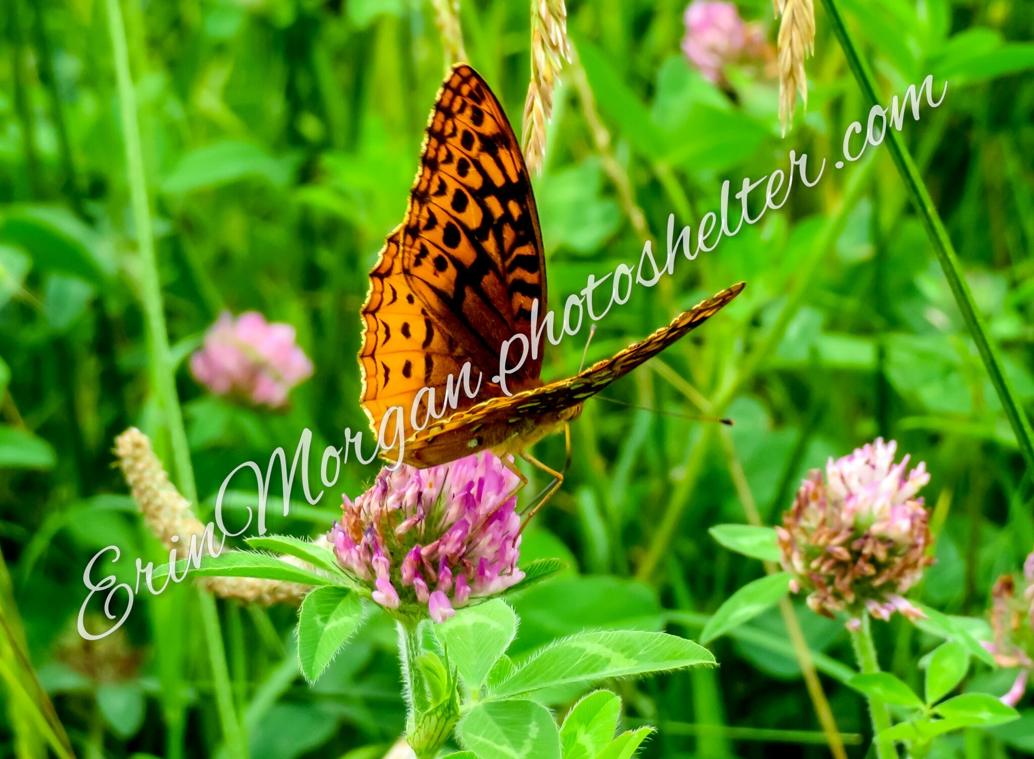 in the meadow  by Erin Morgan