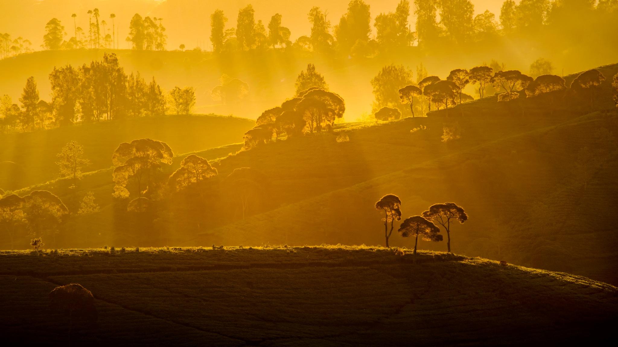 Morning Sunbath by Adnan Hidayat