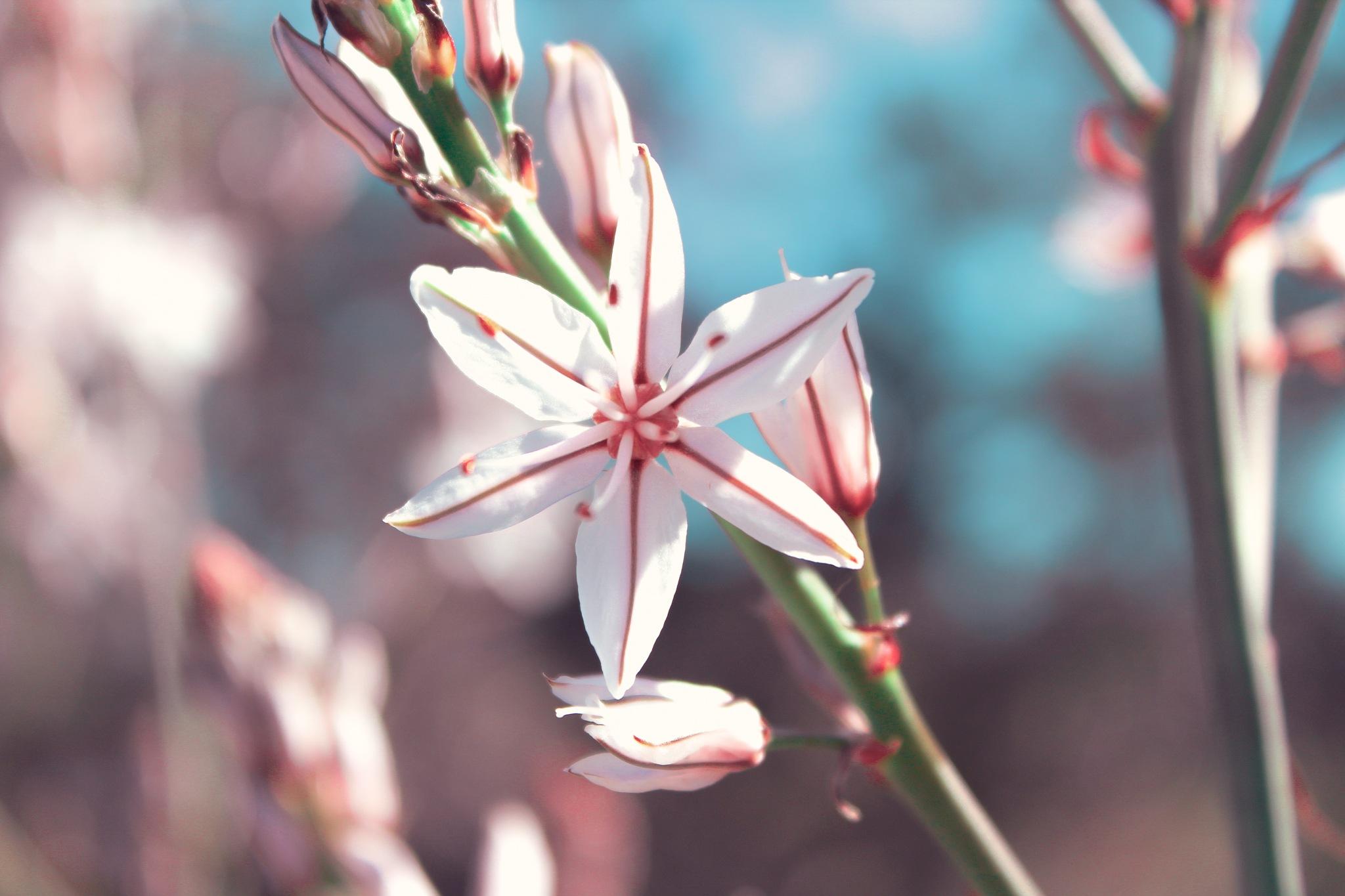 Flower, Macro photography  by Danae Petrides