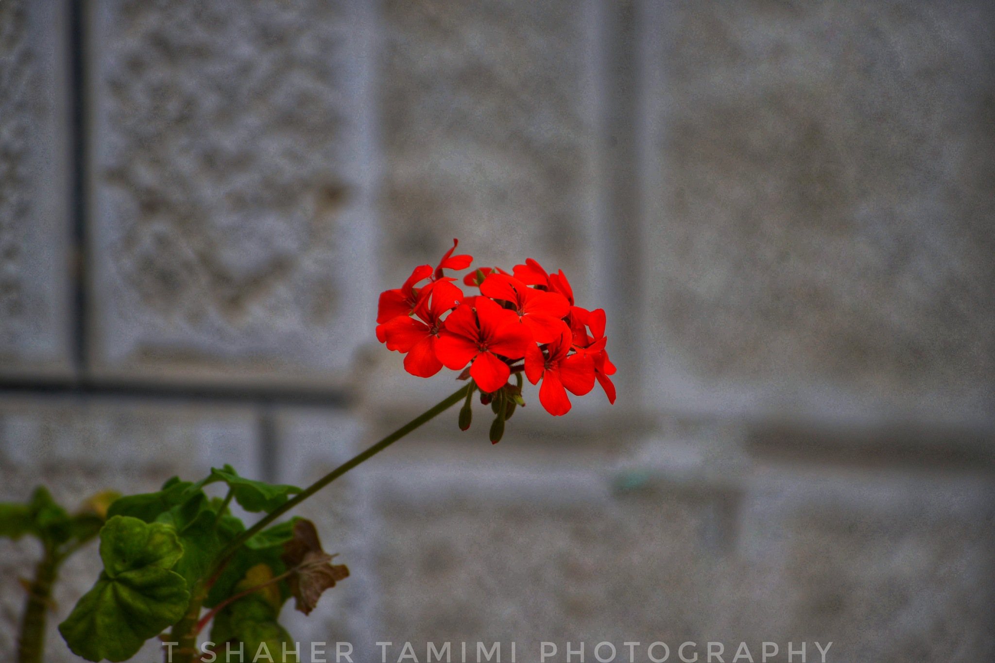 Untitled by shaher tamimi