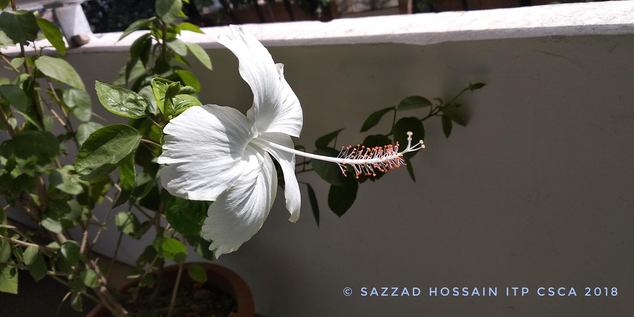 white joba by Sazzad Hossain ITP CSCA