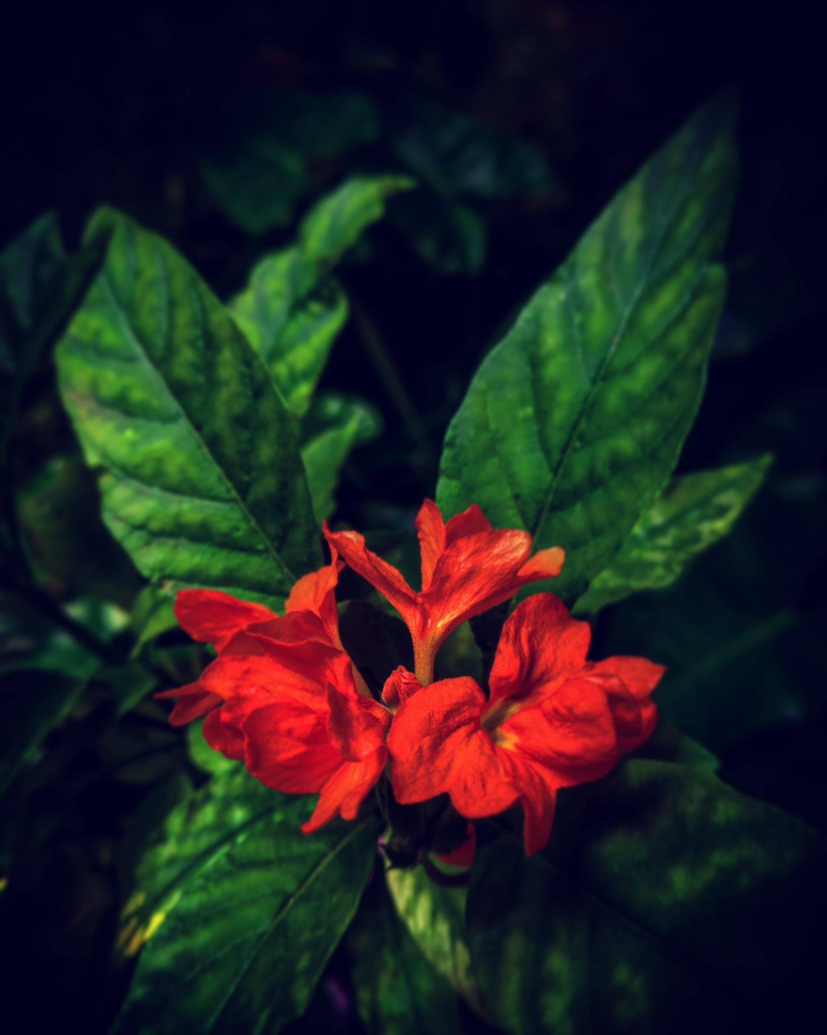 Flower love! by Rohan Pulavarthy