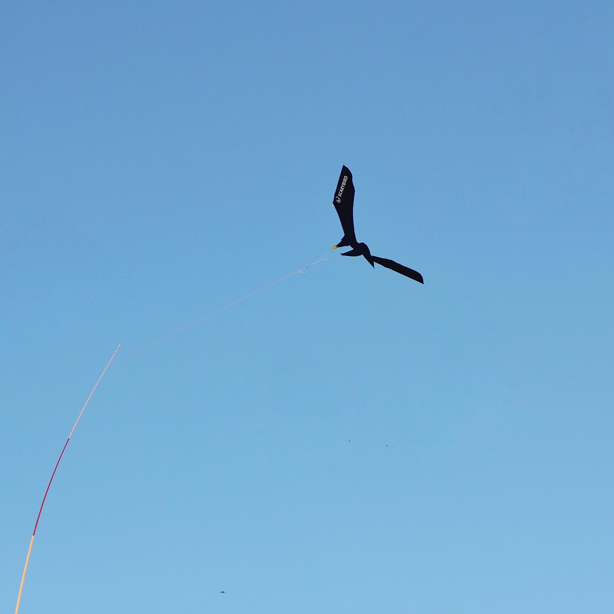 Aiming high.  by Rui Vitorino Azevedo