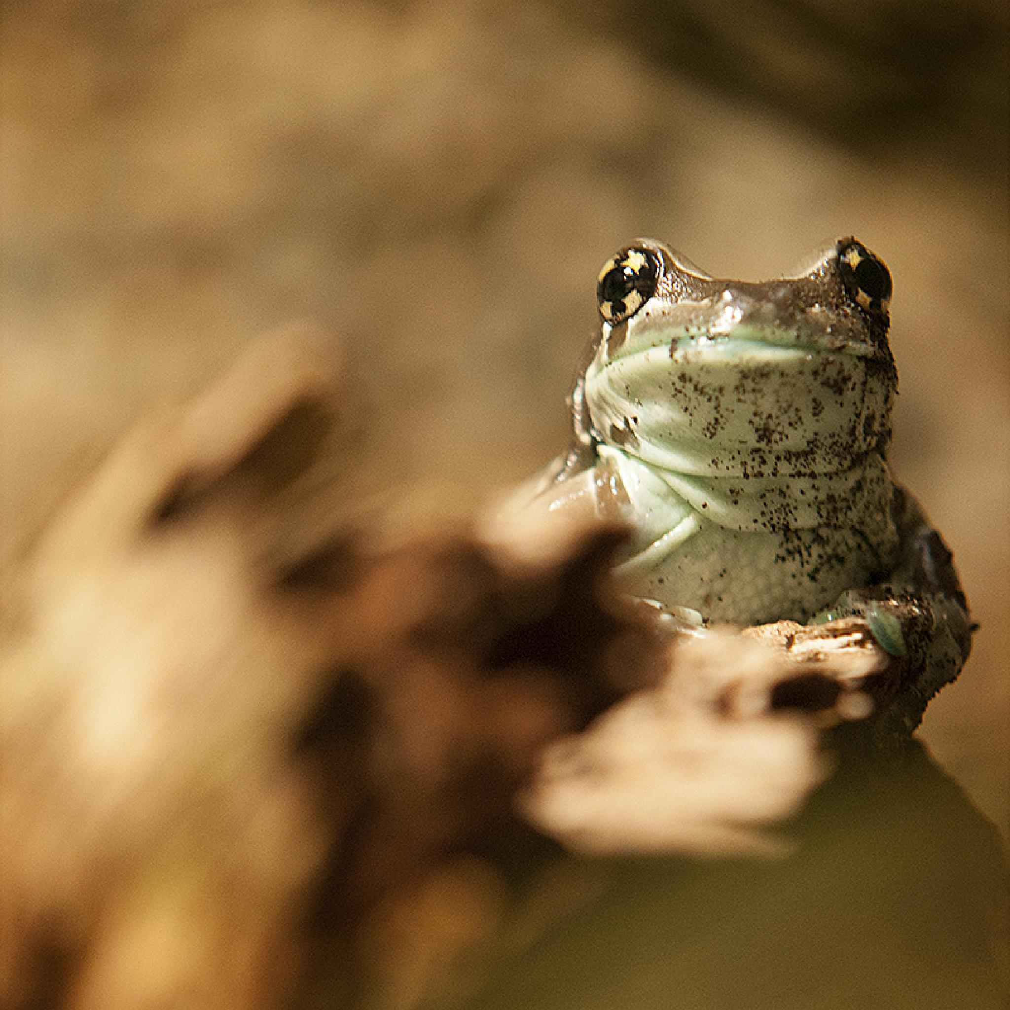 Just a little bit Froggy by stephanie_degen_photography