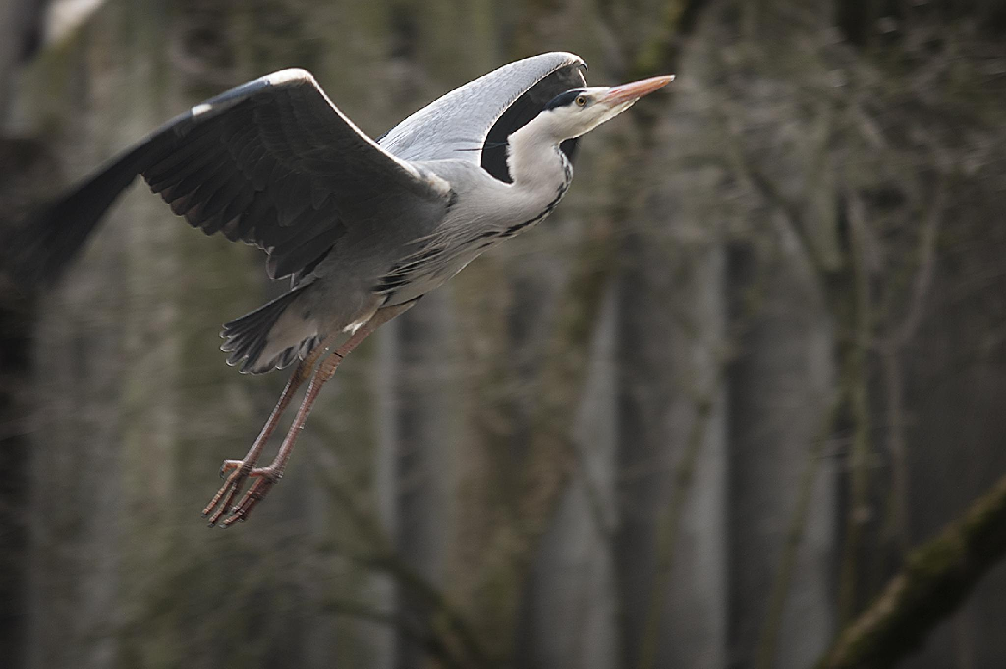 Flying by stephanie_degen_photography