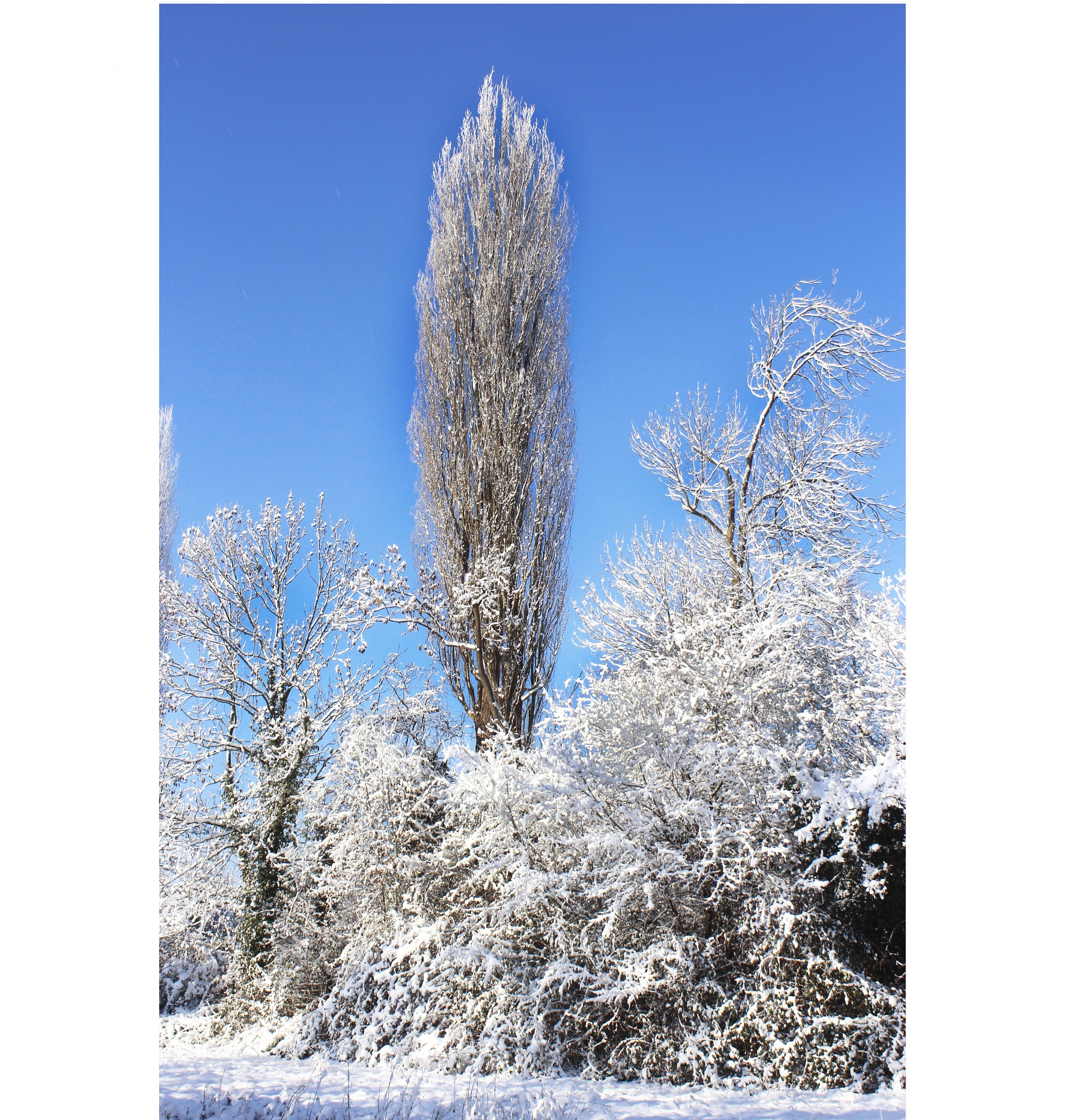 Frosty Botanic in Hanover by Frank Brandes