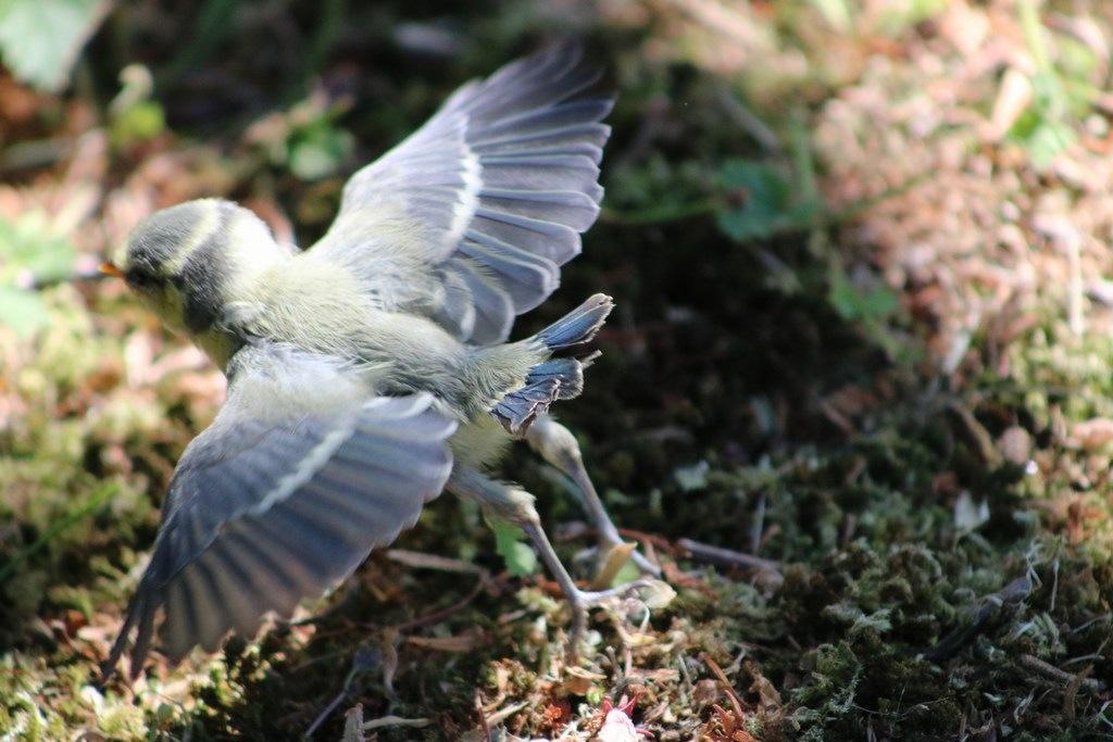 Bird by Josefine Glassau