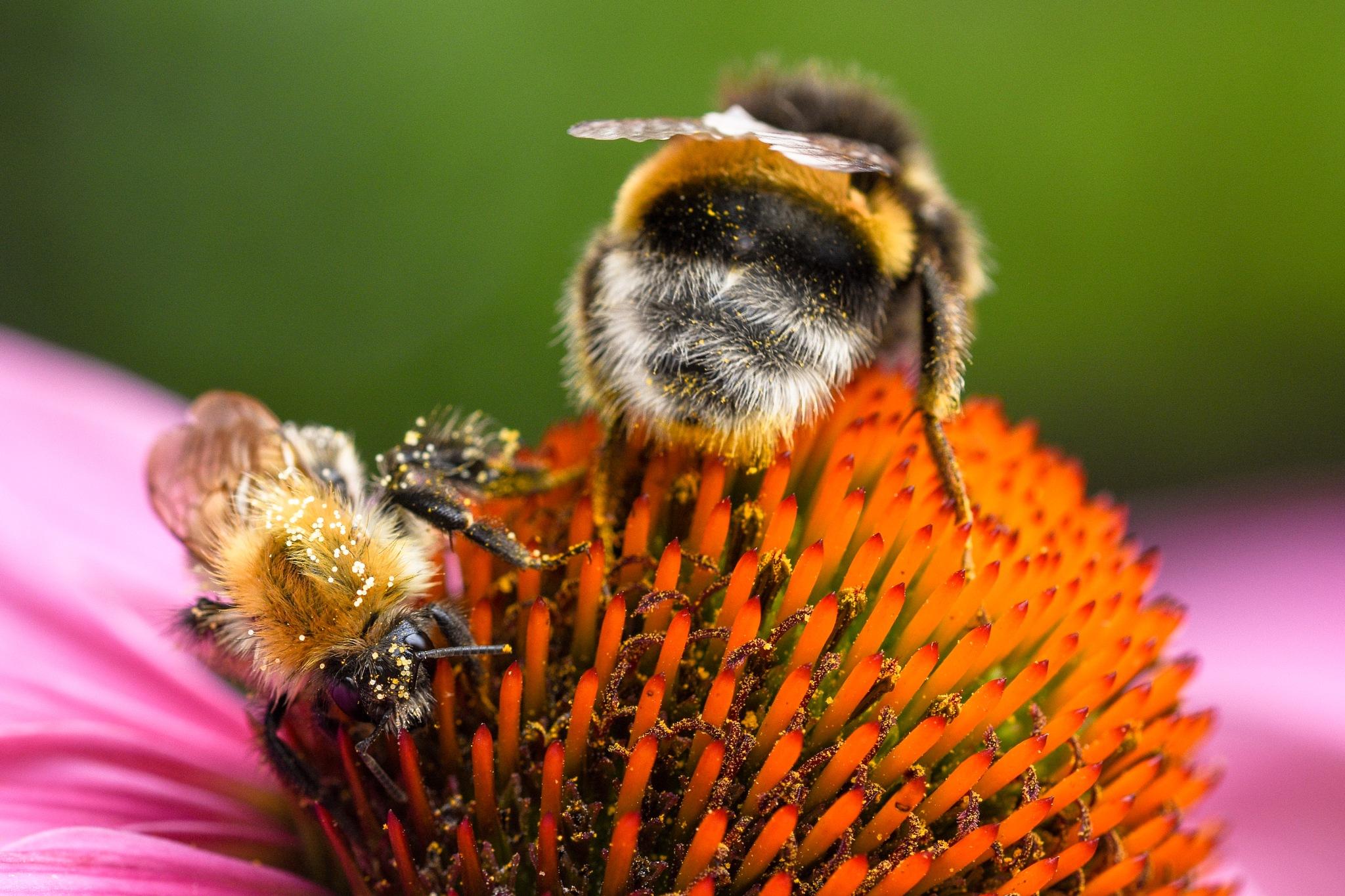 HoneyBuddies by Florian Leroy