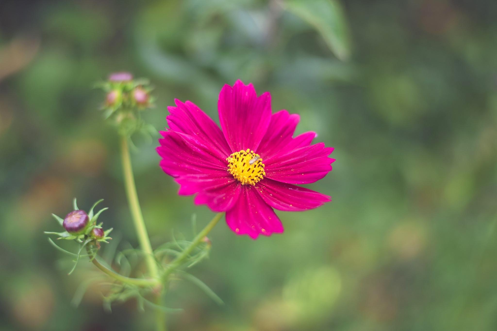 Purple Flower by Ann-Marie Jurek